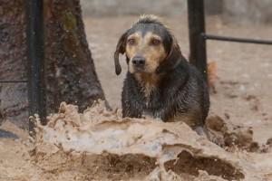 TEMPORAL: Emotivo rescate a perro atrapado en medio de caudal